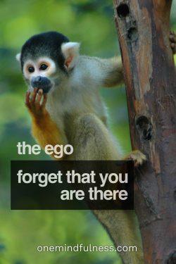 Lao Tzu on self-forgetting