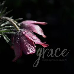 grace - Remindfulness prompt