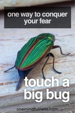 Conquer your fear: touch a big bug
